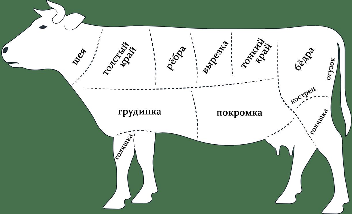 части мяса на немецком в картинках летнее время