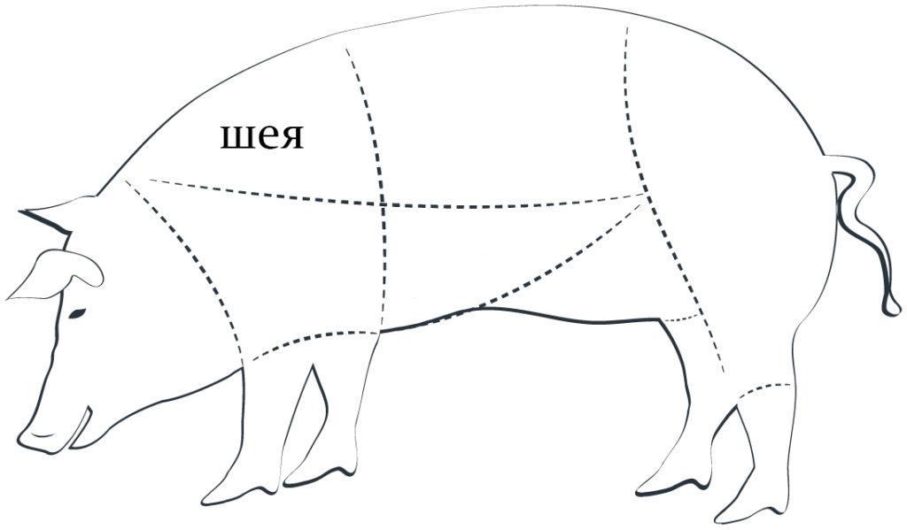свиная шея схема